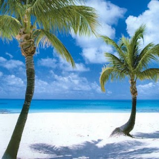 coco-point-beach-barbuda